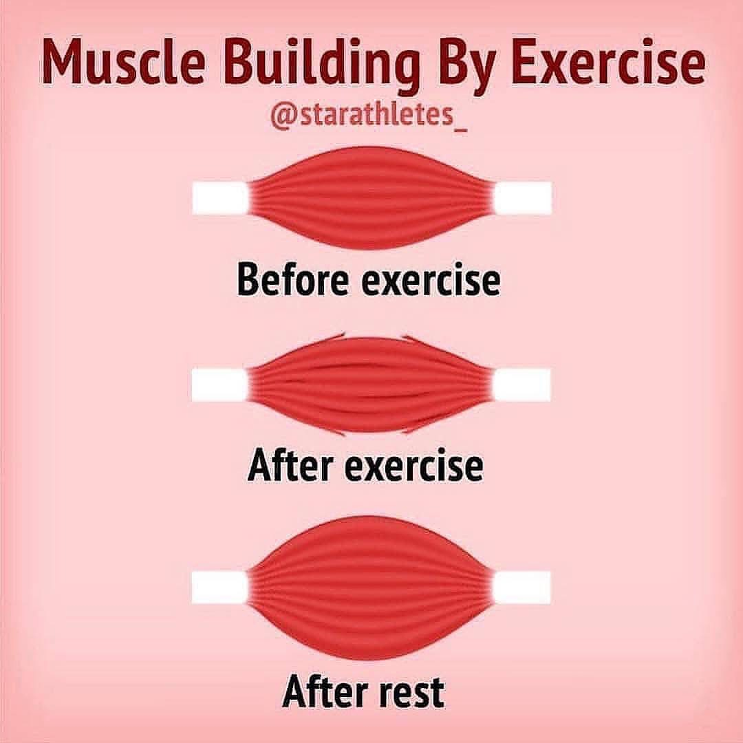 How do you build muscle?